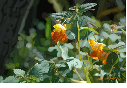 Impatiens Capensis, Jewel Weed blossoms in bright light,de drops on shiny leaves, bark and shadows