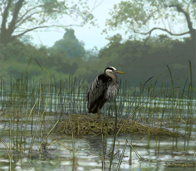Old Heron perched on nest in reeds on channel bank, misty trees  behind